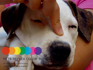 Pets Reflex