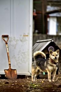 小屋の前で注意を向ける犬