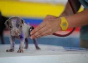 仔犬と聴診器