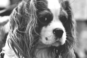 dog-1792599__340